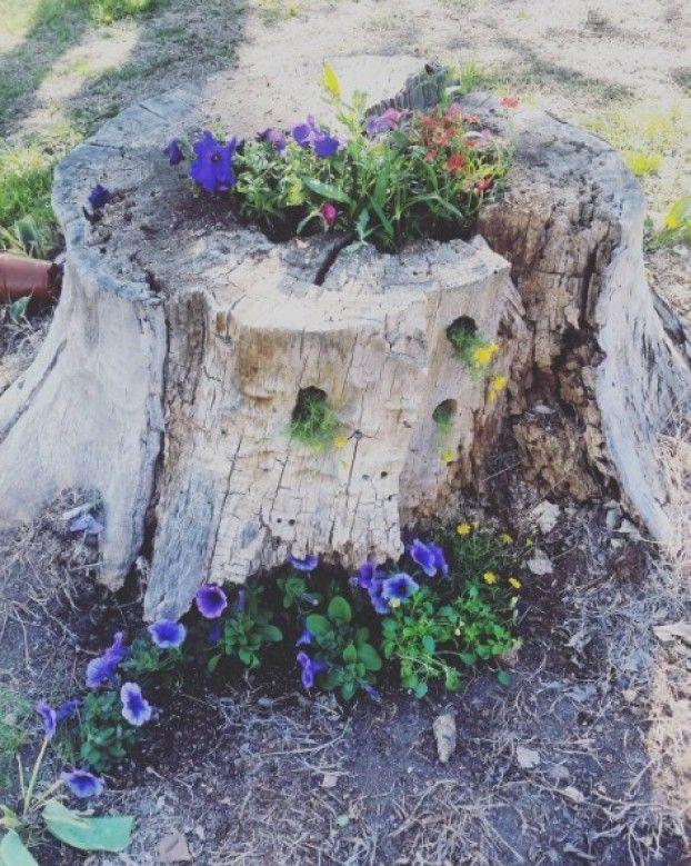 Er Hat Einen Alten Baumstumpf Im Garten Stehen Aber Statt Ihn Zu Entfernen Macht DAS Daraus