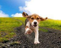 Веселые фотографии собак от Труди Гарднер