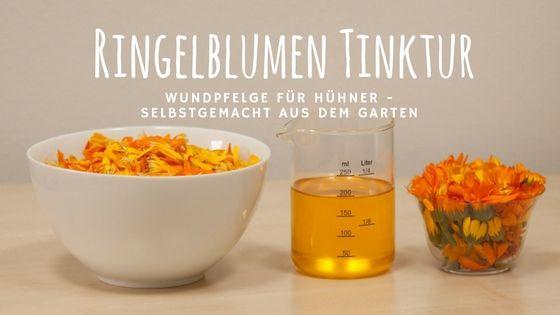 Hühnerkrankheiten mit selbstgemachter Calendula-Tinktur natürlich behandeln: Wunden, Bindehautentzündung, Kropfinfektion, Trichomonaden und Ballenabszesse