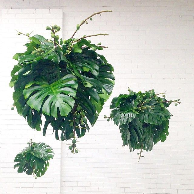Loosleaf's amazing Monstera Chandeliers with Fig branches!!!!!! http://looseleafstore.com.au