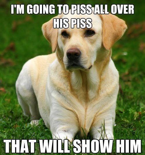 TOP 44 Funny Dog Memes -             (adsbygoogle = window.adsbygoogle || []).push({});
