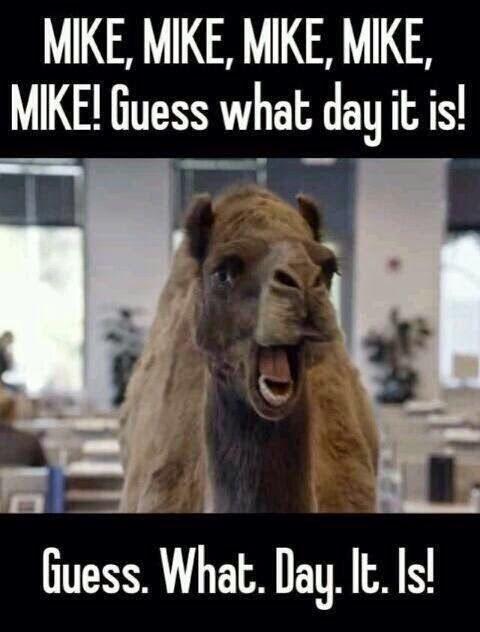 hump day camel  photos  Pinterest  Mike dantoni, Hump day and Hump da...