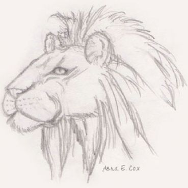 easy lion drawings in pencil - photo #29