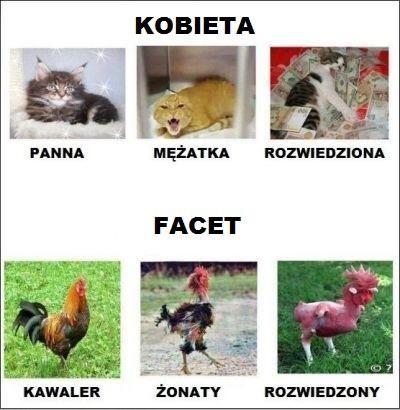 zonaty :D