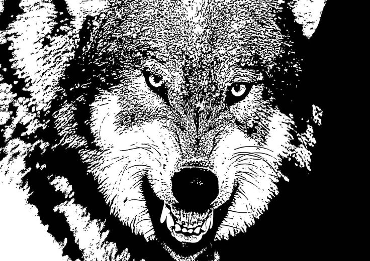 14 Angry Wolf By Chris McCabe - DRAGAN GRAFIX, Stylish Vector Wall Art Posters That You Can Buy In High Resolution PDF Format And Print Any Size You Wish. Decorate Your Walls With Original Art. Only R350 Per Design. Many Designs To Choose From. I Also Create Custom Designed Vector Wall Art. For More Information Call Chris McCabe On 082 482 0076 OR Email chris@dragangrafix.co.za