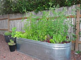Two Men and a Little Farm: GALVANIZED WATER TANK / TROUGH VEGETABLE GARDENS