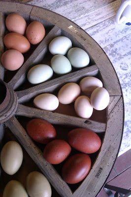 """Die Vielfalt der Natur (oder """"Braune grüne weiße Eier!"""")"""