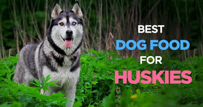 It's not easy finding the best dog food for Huskies since they eat relatively small amount of food for their size. Siberian Huskies have very specific dietary requirements than most other dogs. See what's important when you feeding your furry friend. See more guides to your dogs health, nutrition, training and behavioral problems on PeanutPaws.com