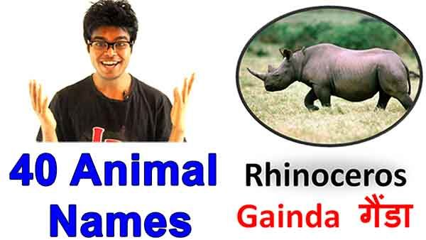 40 Animals Name in Hindi and English with Pictures (+Video+Free Ebook)