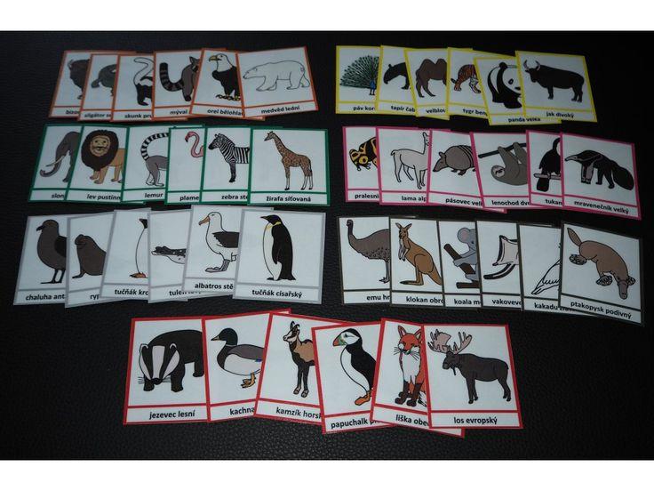 Zvířata světa. Karty.