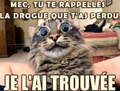 La drogue O-O #drogue #chat #lolcats #lol #fun #humour
