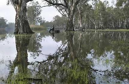 Ranger John Kneebone contemplates the flooded Barmah Forest in Northern ...