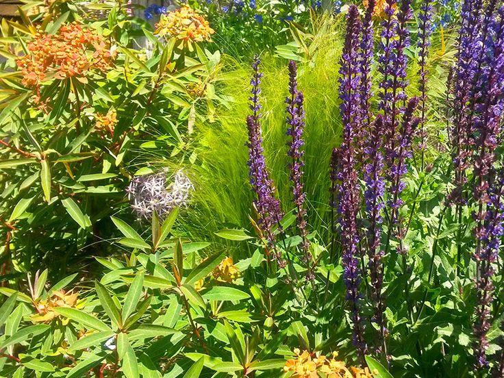 """Conception plantes vivaces-""""Les Jardins des Hurlevents """" http://www.plantes-vivaces-hurlevents.com/"""