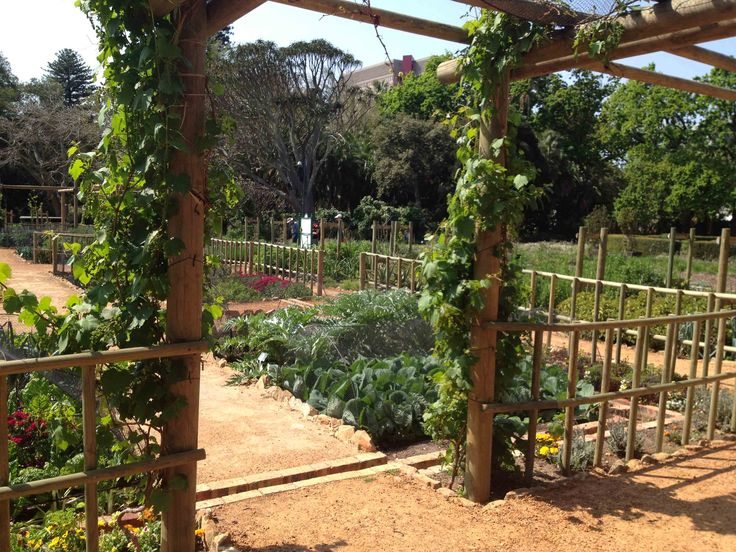 Interesting Voc Vegetable Garden U From Car Park To Abundant Vegetable  Garden Spring Has Arrived With Good Garden Vegetables