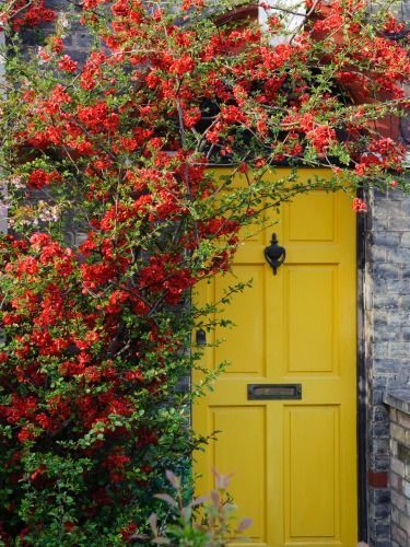 A yellow door has no trouble standing out beneath piles of climbing greens.