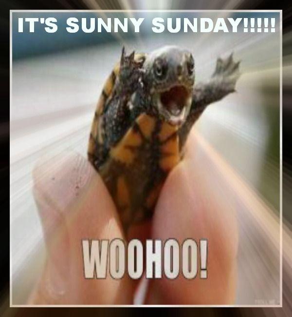 Bildresultat för turtle sunday