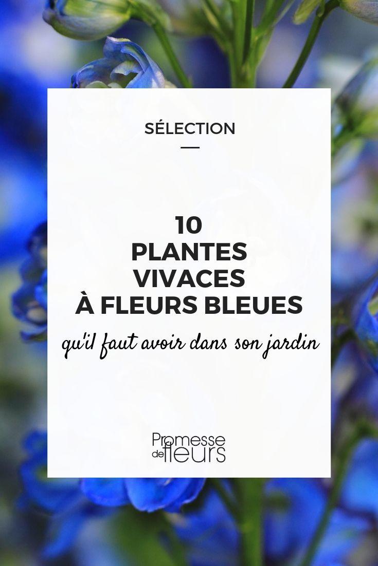10 plantes vivaces à fleurs bleues qu'il faut avoir dans son jardin