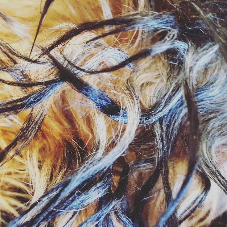 Yorkie hair