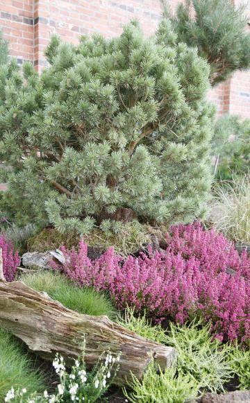 Heidegarten - leider nichts für unseren schattigen Vorgarten :-(