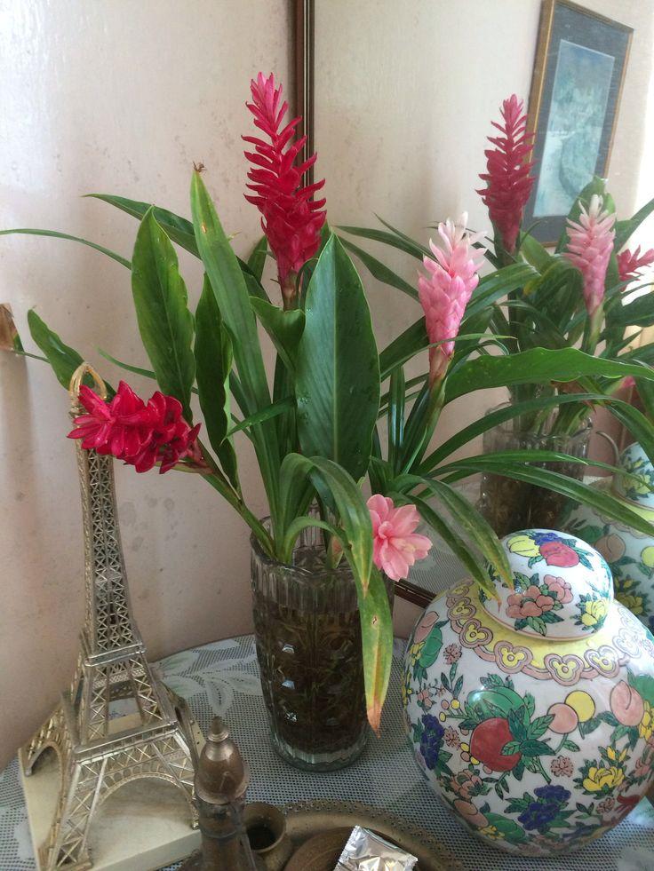 Flower cuttings from my garden