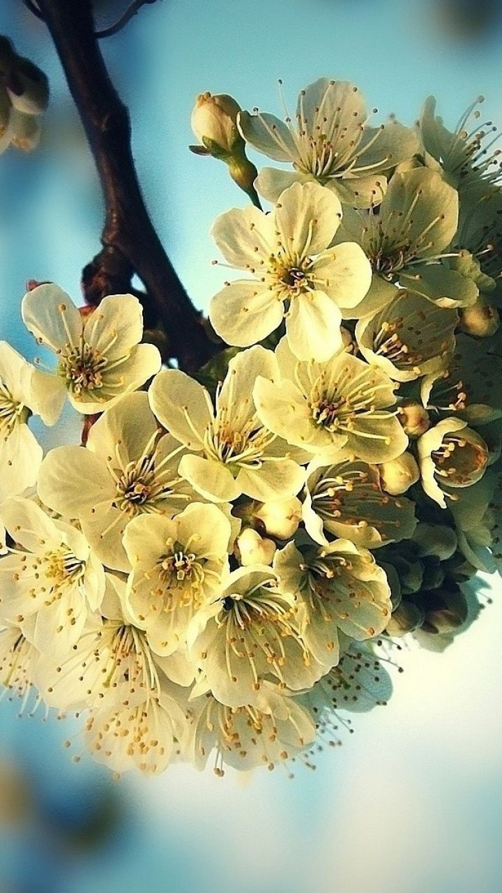 картинки весна на телефон самсунг галакси при наведении мыши