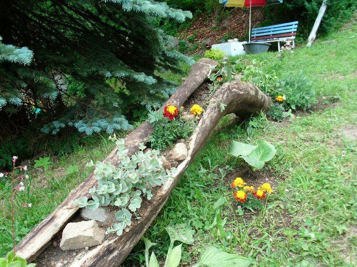 zahrada (starý vykotlaný kmen osázený zelení)