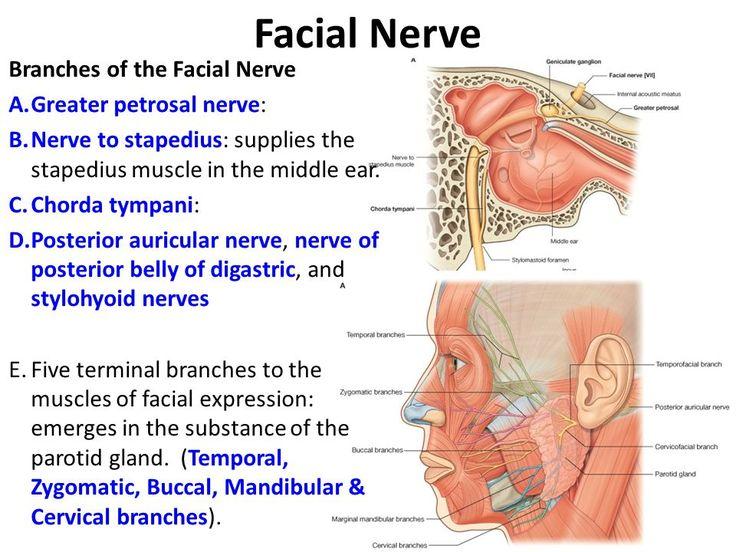 Sensory branch facial nerve