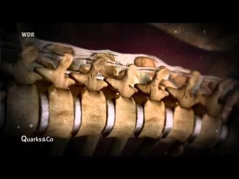 ▶ Quarks & Co Geheimnisvolle Faszien - Neues vom Rücken - YouTube