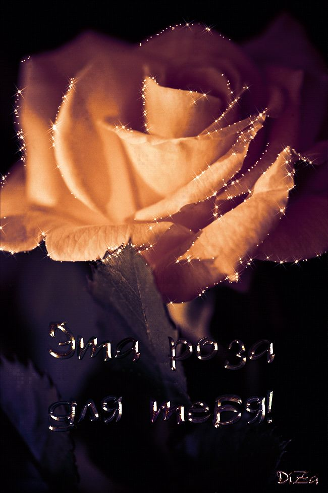 Живые открытки розы вечер