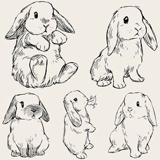 Buns 🐰 #art #drawing #sketch #sketchbook