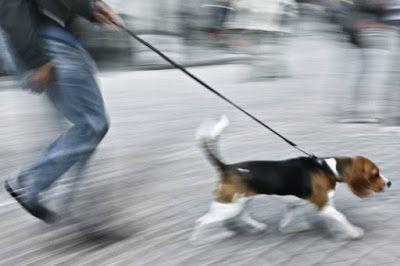 Educazione, comportamento e bon ton del cane in società: PERCHE' IL MIO CANETIRA AL GUINZAGLIO??  La doman...