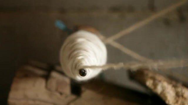 Vilar Seco dia 10 de Maio de 2012    O caneleiro é um engenho usado primariamente para encher canelas (para o tear). Neste vídeo o caneleiro é usado para torcer dois fios de lã (criando um fio retorcido), operação normalmente realizada no tornou ou fuso.    O processo desenrola-se em dois momentos consecutivamente repetidos: no primeiro o caneleiro, ao girar, transmite a torção a uma porção de fio. No segundo esta porção de fio é enrolada em torno do eixo.