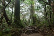 δάσος, ονειροκρίτης, δέντρα