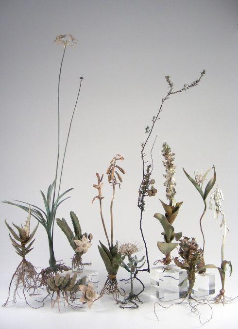 Nic Bladen Botanicals