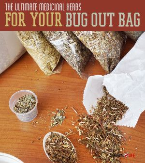 The Ultimate Medicinal Herbs to Stock Up on For Your Bug Out Bag | survivallife.com