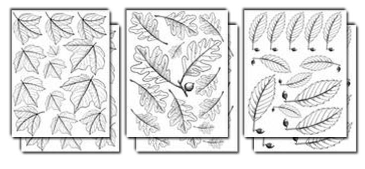 Royalty Free Designs you can woodburn onto your gourds! Leaf Designs