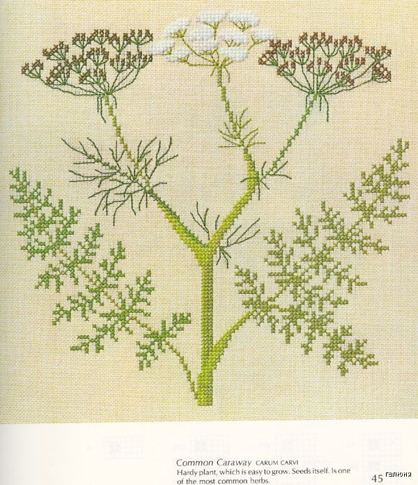Gallery.ru / Foto # 36 - Plantas Medicinales - Mosca