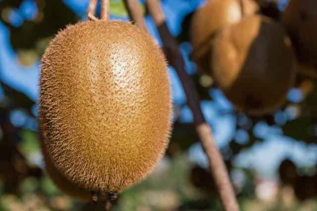 Comment faire pousser des fruits   Faire pousser un arbre, Planter des graines et Kiwi