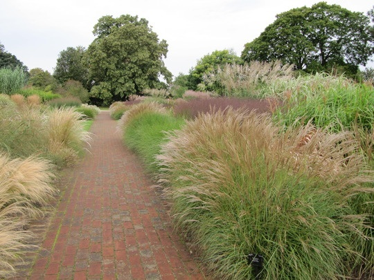 22 best images about ornamental grass on pinterest for Ornamental grasses for ponds