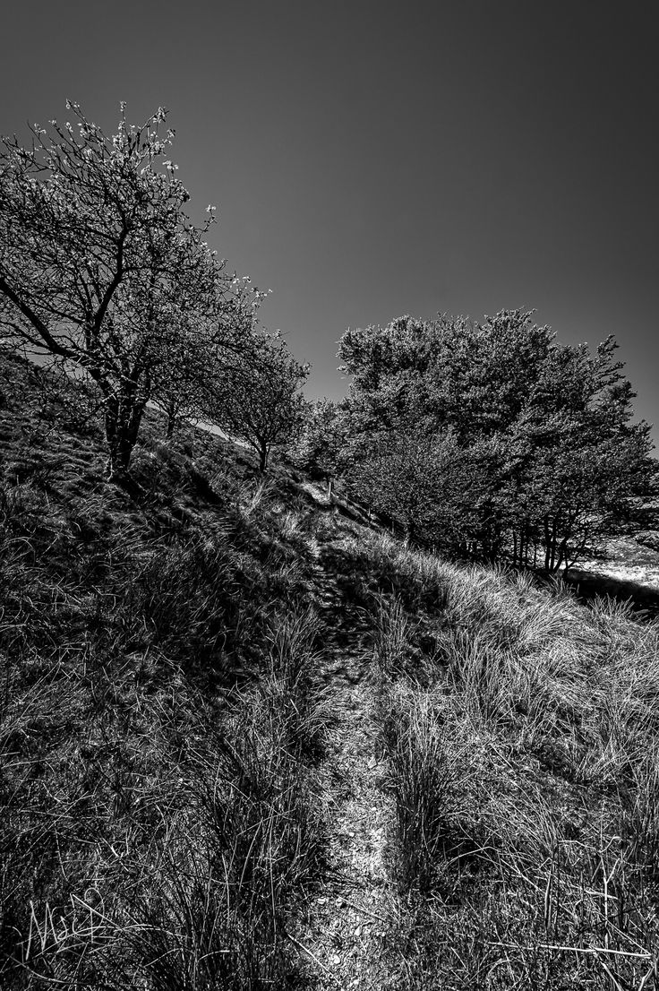 #Exmoor has some lovely trails to walk, why not visit?  Photo by Mark Stothard Photographer - Read More http://msp.im/1UtMLTj
