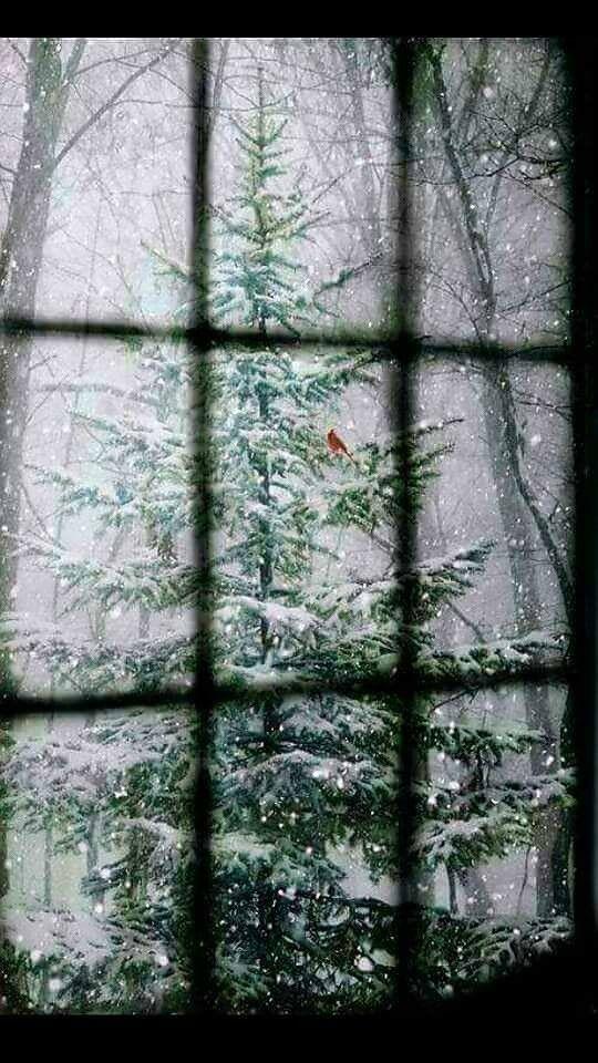 Скоро-скоро Новый год! ))