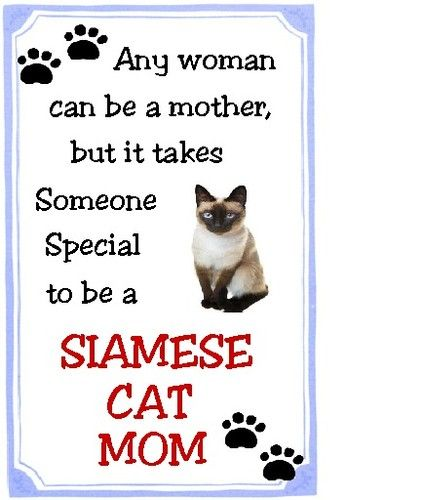 Siamese Cat Mom This Goes Out to my wonderful mother Toni Haffner Hickey