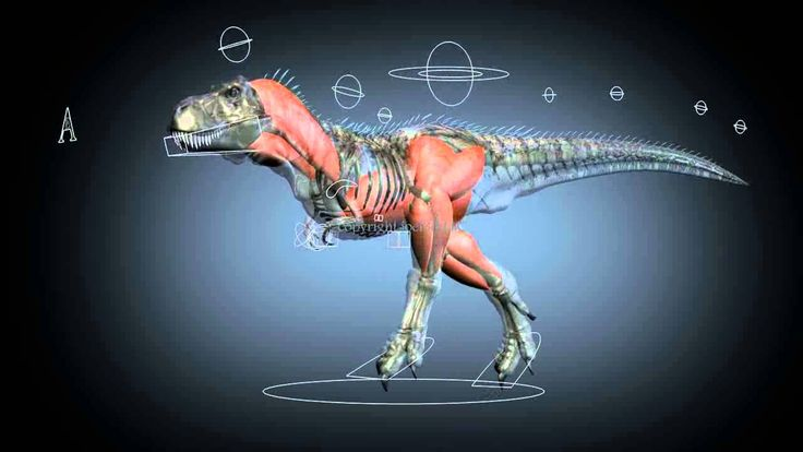 Tyrannosaur Rig and Muscle System