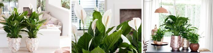 9 planten die zelfs iemand zonder groene vingers niet kapot krijgt - Libelle