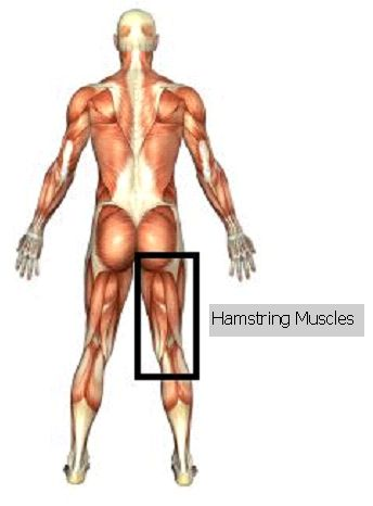 Great Video on Eccentric Hamstring Exercises from Physio Answers. Pinned by SOS Inc. Resources @sostherapy.