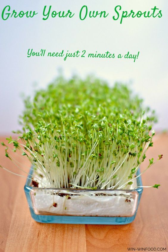 Sprouting | WIN-WINFOOD.com Sprout seeds, beans and much more and grow your own little garden! You'll need just 2 minutes per day to do it.