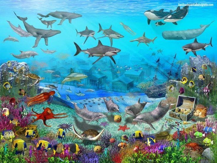 Descargar imagen tapiz flores acuario colorido fondos de pantalla