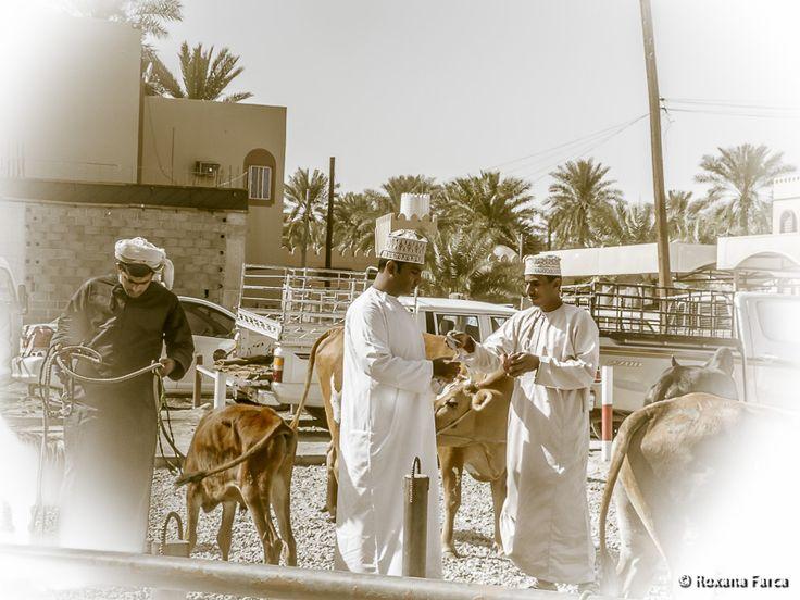 Vanzare reusita - targul de animale din Nizwa Sale closed.