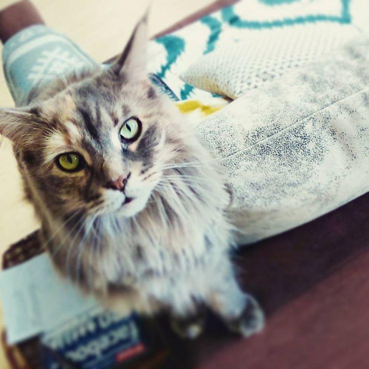 In the interiors - Blog o wnętrzach: Koty w domu - sierść wszędzie!