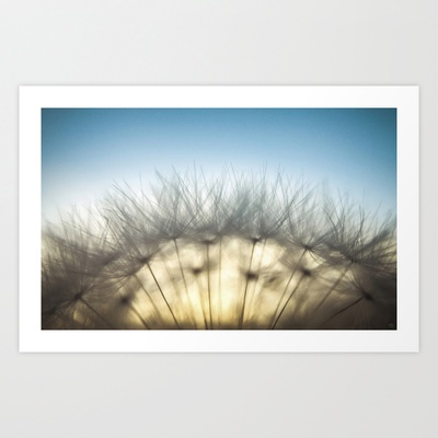Dandelion & Sun I. (color) Art Print by Martin Misik - $15.00 // #print #art #society6 #dandelion #sunset #prague #macro #flower #blue #yellow #fluff #seed #flying #calm #quiet #still #relaxation #meditation #evening #globe